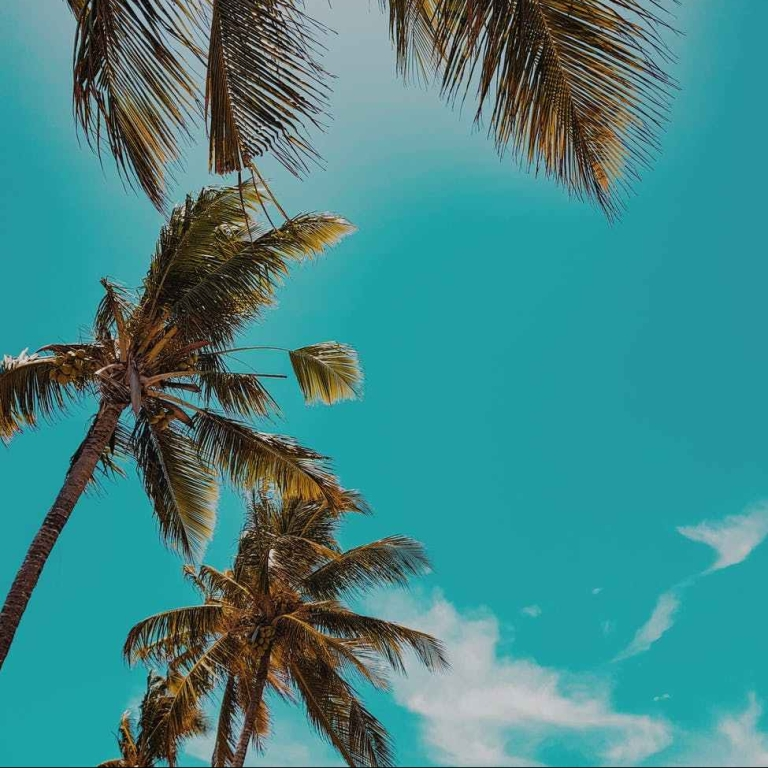 low angle photo of palm trees during daytime