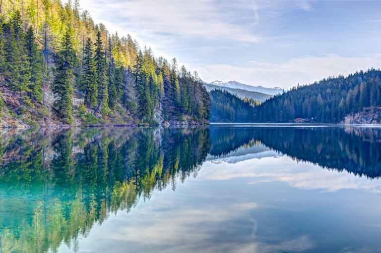 green pine trees near body of water