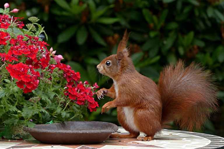 animal animal photography blur close up