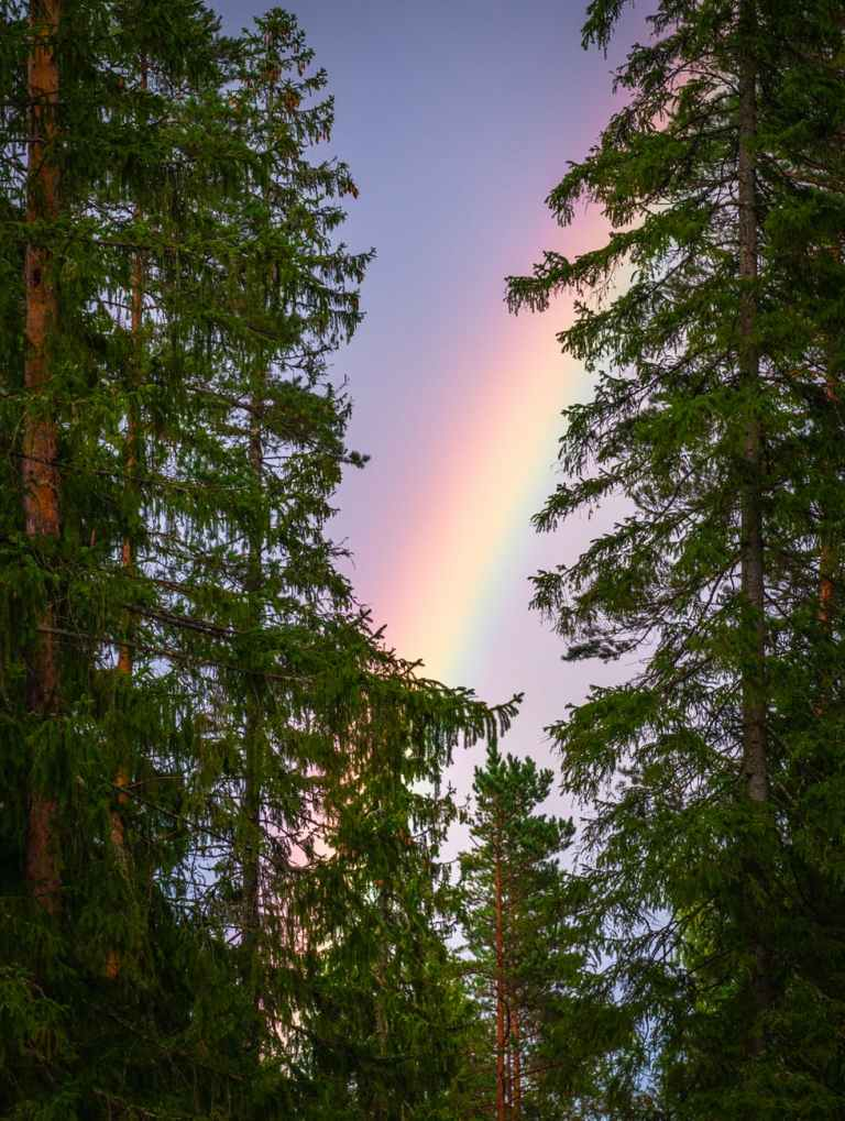 photo of trees and rainbow