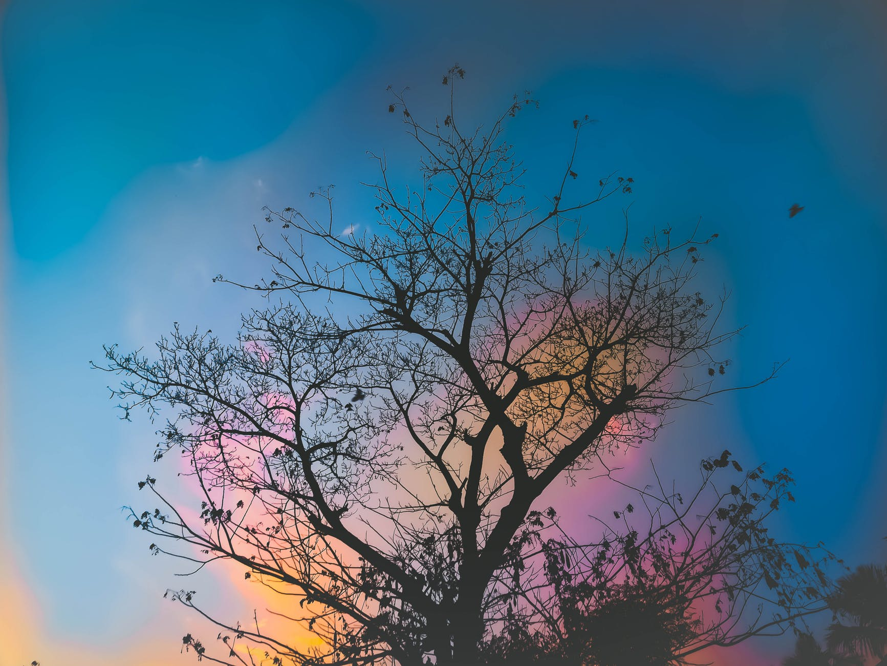 low angle photography of bare tree