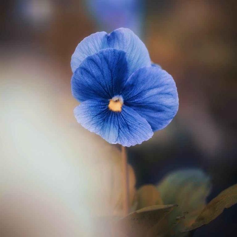 blue petal flower