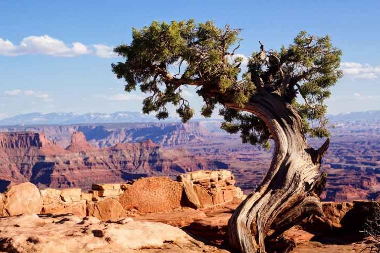 tree near a cliff